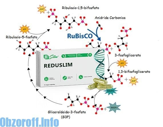 Dimagrimento Reduslim: il processo del metabolismo