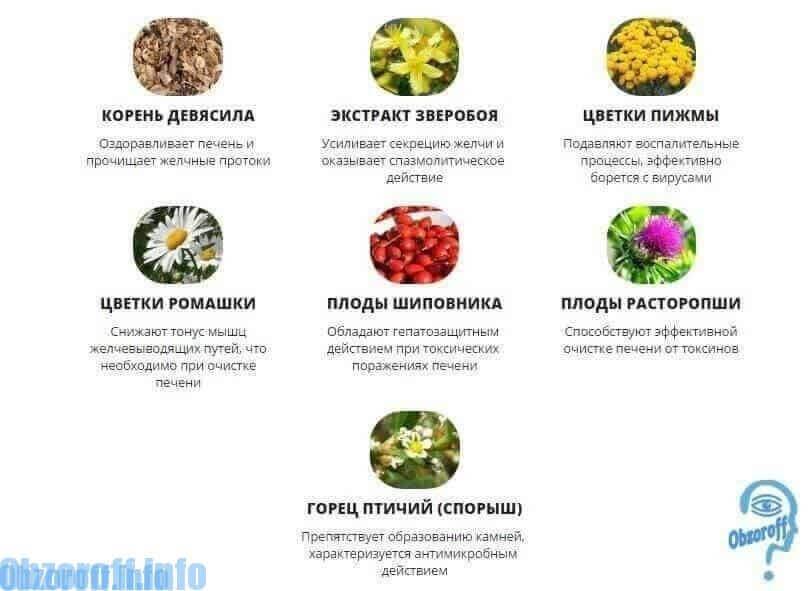 Склад Ціррофолл для відновлення печінки