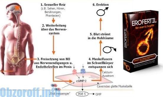 Wirkung von Erofertil Tabletten auf die Verbesserung der männlichen Potenz