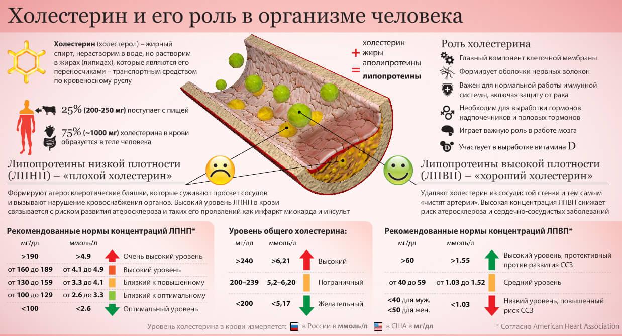 Холестерин және оның организмдегі рөлі