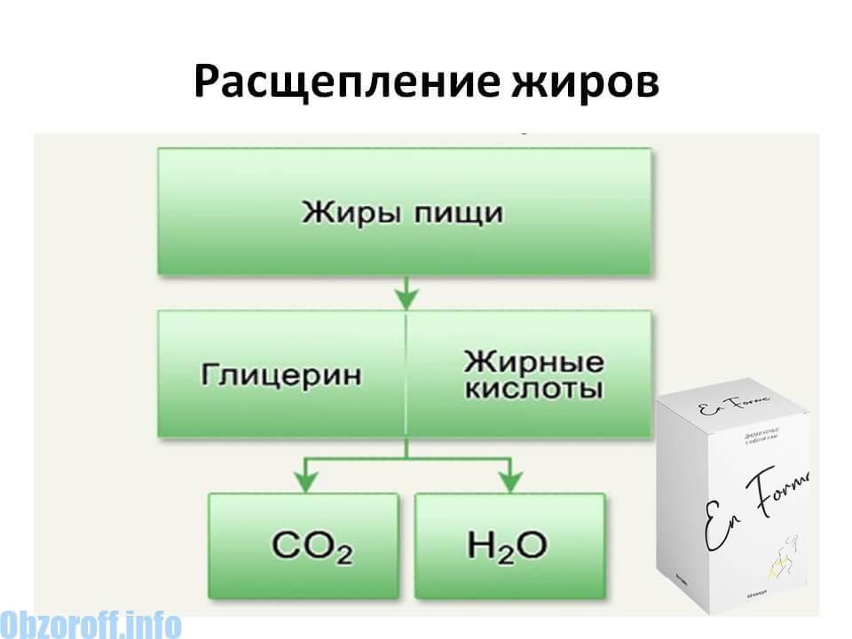 Механизм действия En Forme
