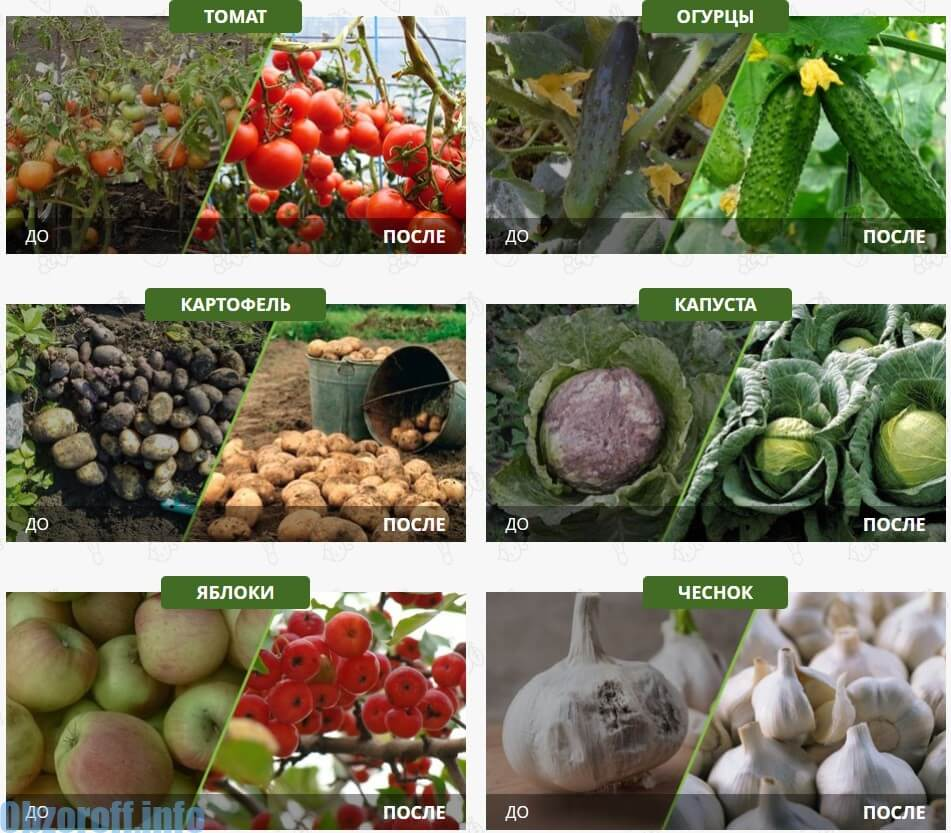 Action secrète et efficacité Agroplant