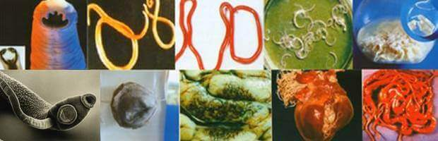 Varieties of worms and parasites in the human body